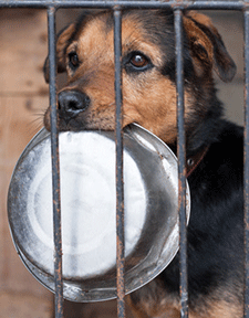 Feed Shelter Dogs